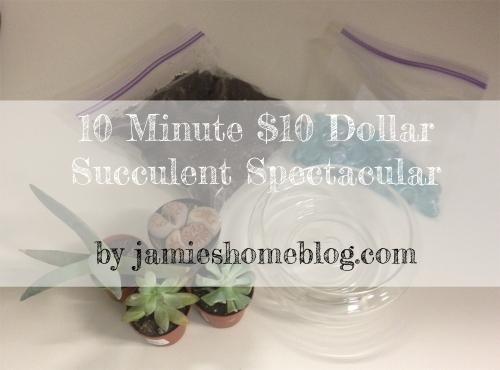 Easy DIY Succulent Garden